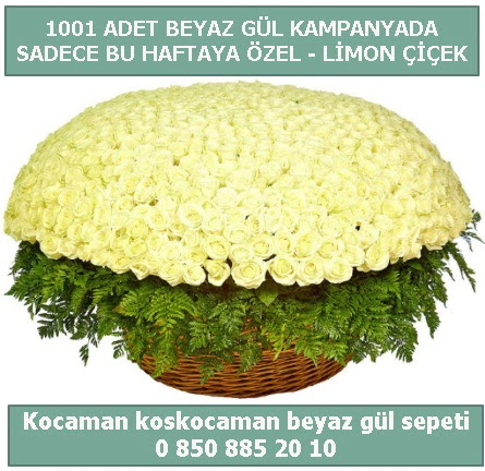 1001 adet beyaz gül sepeti özel kampanyada  Hakkari İnternetten çiçek siparişi