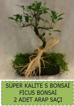 Ficus S Bonsai ve arap saçı  Hakkari çiçek gönderme
