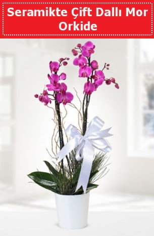 Seramikte Çift Dallı Mor Orkide  Hakkari 14 şubat sevgililer günü çiçek