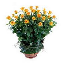 Hakkari cicek , cicekci  10 adet sari gül tanzim cam yada mika vazoda çiçek