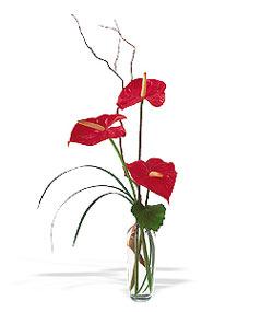 Hakkari çiçekçi mağazası  cam yada mika Vazoda 3 adet  antoryum