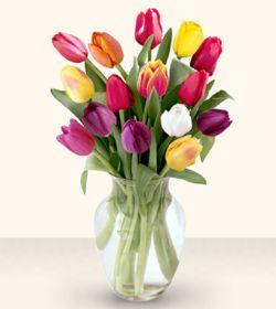 Hakkari internetten çiçek satışı  13 adet cam yada mika vazoda laleler