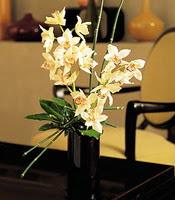 Hakkari internetten çiçek satışı  cam yada mika vazo içerisinde dal orkide