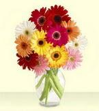Hakkari online çiçekçi , çiçek siparişi  cam yada mika vazoda 15 özel gerbera