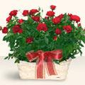 Hakkari çiçek yolla , çiçek gönder , çiçekçi   11 adet kirmizi gül sepette