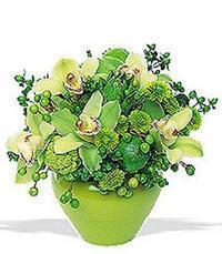 cam yada mika vazoda 5 adet orkide   Hakkari yurtiçi ve yurtdışı çiçek siparişi