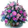 karisik mevsim kir çiçekleri  Hakkari İnternetten çiçek siparişi