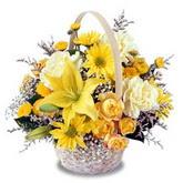 sadece sari çiçek sepeti   Hakkari İnternetten çiçek siparişi