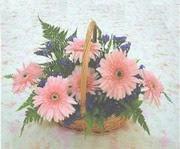 gerbera çiçeklerinde sepet   Hakkari çiçek gönderme sitemiz güvenlidir