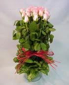 13 adet pembe gül silindirde   Hakkari çiçek gönderme sitemiz güvenlidir