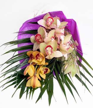 Hakkari cicek , cicekci  1 adet dal orkide buket halinde sunulmakta