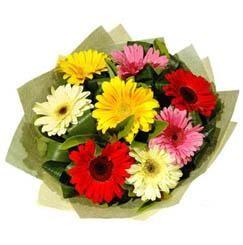 9 adet karisik gerbera demeti  Hakkari çiçek servisi , çiçekçi adresleri