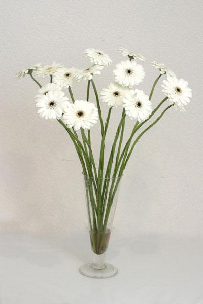 Hakkari çiçek servisi , çiçekçi adresleri  cam vazo içerisinde 17 adet sade gerbera