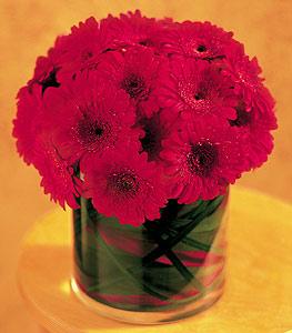 Hakkari çiçek , çiçekçi , çiçekçilik  23 adet gerbera çiçegi sade ve sik cam içerisinde