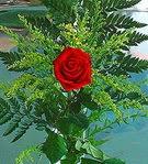1 adet kirmizi gül buketi   Hakkari internetten çiçek siparişi
