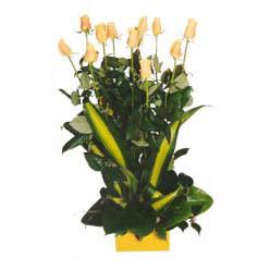 12 adet beyaz gül aranjmani  Hakkari çiçek mağazası , çiçekçi adresleri