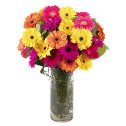 KARISIK GERBERALARDAN CAM VAZO TANZIMI  Hakkari kaliteli taze ve ucuz çiçekler