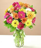 Hakkari hediye sevgilime hediye çiçek  17 adet karisik gerbera