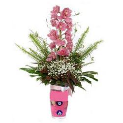 Hakkari ucuz çiçek gönder  cam yada mika vazo içerisinde tek dal orkide çiçegi