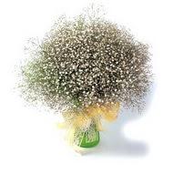 Hakkari çiçek servisi , çiçekçi adresleri  cam yada mika vazo içerisinde cipsofilya demeti