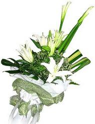 Hakkari kaliteli taze ve ucuz çiçekler  3 dal kazablanka çiçegi ve yesillikler