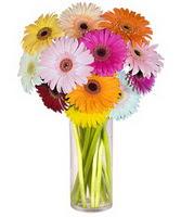 Hakkari çiçekçiler  Farkli renklerde 15 adet gerbera çiçegi