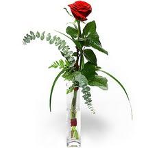 Hakkari uluslararası çiçek gönderme  Sana deger veriyorum bir adet gül cam yada mika vazoda
