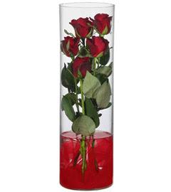 cam içerisinde 7 adet kirmizi gül  Hakkari internetten çiçek satışı