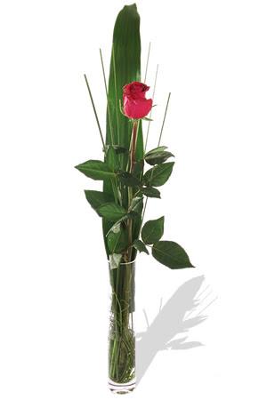 1 adet cam vazo içerisinde kirmizi gül  Hakkari çiçek satışı