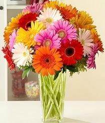 Hakkari çiçek online çiçek siparişi  15 adet gerbera çiçek vazosu