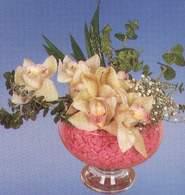 Hakkari çiçek servisi , çiçekçi adresleri  Dal orkide kalite bir hediye