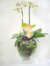 Hakkari çiçekçi telefonları  Cam yada mika vazoda özel orkideler