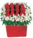 Hakkari çiçek yolla  Kare cam yada mika içinde kirmizi güller - anneler günü seçimi özel çiçek