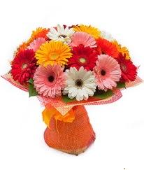 Renkli gerbera buketi  Hakkari 14 şubat sevgililer günü çiçek