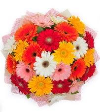 15 adet renkli gerbera buketi  Hakkari güvenli kaliteli hızlı çiçek