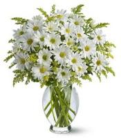 Vazo içerisinde beyaz krizantem çiçekleri  Hakkari hediye çiçek yolla
