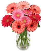 vazo içerisinde 13 adet gerbera çiçeği  Hakkari çiçekçi mağazası