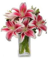 Vazo içerisinde 5 dal kazablanka çiçeği  Hakkari cicek , cicekci