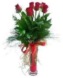 vazo içerisinde 5 kırmızı gül  Hakkari kaliteli taze ve ucuz çiçekler