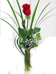 Cam içerisinde 1 kırmızı gül  Hakkari İnternetten çiçek siparişi