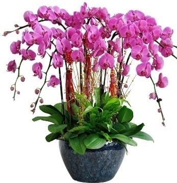 9 dallı mor orkide  Hakkari uluslararası çiçek gönderme