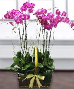 4 dallı mor orkide  Hakkari kaliteli taze ve ucuz çiçekler