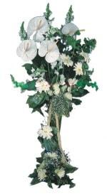 Hakkari çiçek servisi , çiçekçi adresleri  antoryumlarin büyüsü özel