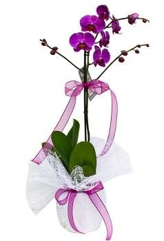 Tek dallı mor orkide  Hakkari çiçek gönderme