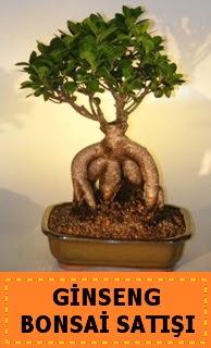 Ginseng bonsai satışı japon ağacı  Hakkari online çiçek gönderme sipariş