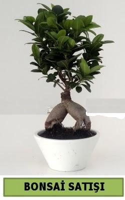 Bonsai japon ağacı satışı  Hakkari çiçek online çiçek siparişi