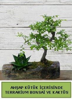 Ahşap kütük bonsai kaktüs teraryum  Hakkari çiçekçiler