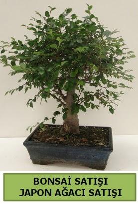 Minyatür bonsai japon ağacı satışı  Hakkari İnternetten çiçek siparişi