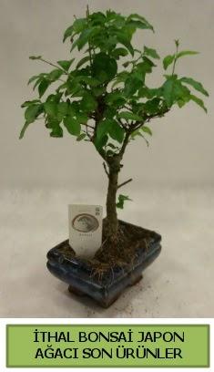 İthal bonsai japon ağacı bitkisi  Hakkari anneler günü çiçek yolla