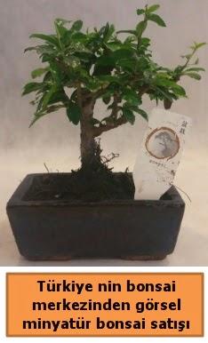 Japon ağacı bonsai satışı ithal görsel  Hakkari çiçek gönderme sitemiz güvenlidir